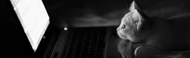 internet-gatinho